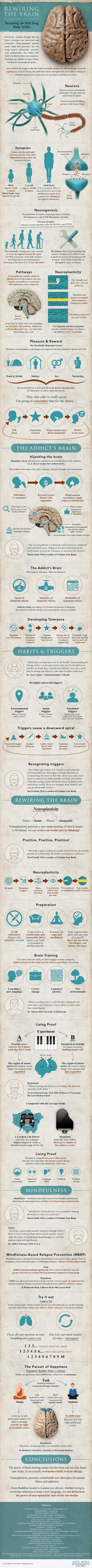 Rewiring_the_Brain_Infographic