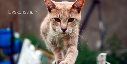 PY-katt-livskonstnär.jpg